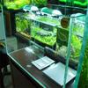 Aquarium glass plant tank fish aquarium manufacturer