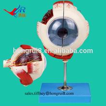 ISO Advanced Amplified Eyeball Model