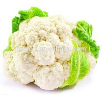 2014 IQF Cauliflower in Frozen vegetables