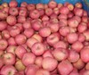 All Round Year Supply Fresh Red Fuji Apple