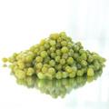 cuits vert haricots mungo