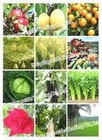 NPK fertilizer 16-16-16