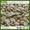 free sample arabica green coffee bean