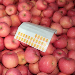 Shangdong Yantai Apple Fruit Hot Sale In South Africa