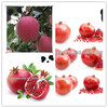 wholesale prices apple fruit royal gala apple fruit on hot sale