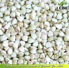 2014 crop Hulled Buckwheat Kernel groats Bulk package