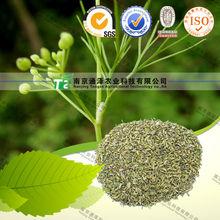 Chinese herb medicine cumin