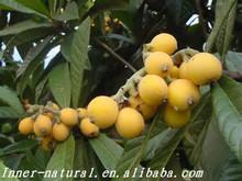 High quality Loquat Leaves Extract (Ursolic Acid 95%HPLC)