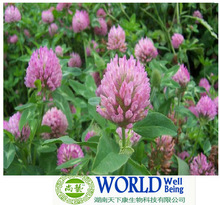 Supplier red clover extract zonghoo /red clover extract 40% isoflavones / Red clover extract powder
