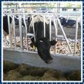 Matériel élevage vache bovins, serrures galvanisé à chaud