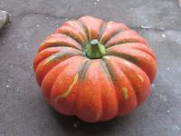 Factory custom fake pumpkins for home decoration