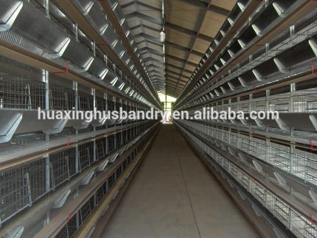 Parrot Farm Malaysia Poultry Farm in Malaysia