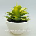 blanco con olla de cerámica de la planta para la decoración del hogar