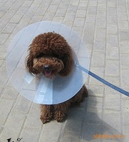 pet protection cover