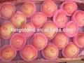 chinês fresh fuji apple