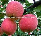 Chinese fresh gala apple fruit