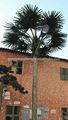 Sjh081905 extérieur. électrique. palm tree light up palmiers palmiers artificiels vente