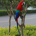 أفخم الحيوانات الطيور الملونة لهجة يتحدث يتحدث الببغاء اللعب مضحك
