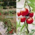 Suporte para plantas em vasos de ferro/fio do ferro para a planta