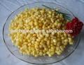 iqf mais dolce kerneler
