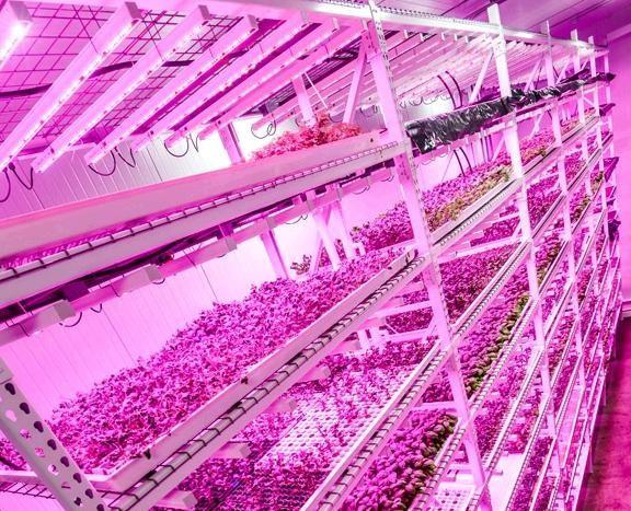 Uv lamp growing plants uk