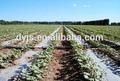 mulched de riego por goteo para aumentar la producción y ahorrar agua