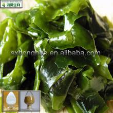 High Quality 10%-95% fucoidan seaweed extract in stock