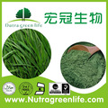 Suco de cevada pó, 100-200mesh, orgânica certificada