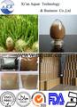 100% природных экстракт кактуса hoodia, 20: 1, профессиональный поставщик и самое лучшее цена, экстракт кактуса hoodia