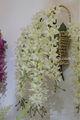 fornecedor confiável de boa qualidade tipos de flores para cestas de suspensão