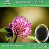 Halal&Kosher Red Clover Isoflavones/Red Clover PE/Red Clover P.E. Powder