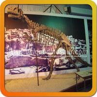 Dinosaur bones for sale museum dinosaur fossil craft
