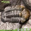 prehistóricos fósiles trilobites para la venta
