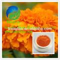 Zeaxantina natural/extrato de calêndula para melhorar a visão