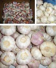 Chinese Fresh Garlic for uk,canada,usa and eu market
