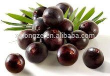 acai berry wholesale organic brazilian acai berry extract powder