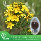 High Quality St Johns Wort extract 0.3% Hyperforin powder