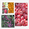 fresh fruit company from china with best price in good quality