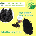 hot selling fruit p.e/ mulberry fruit p.e