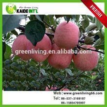 Bulk Fresh Crisp Red Fuji Apple Fruit From China Factory