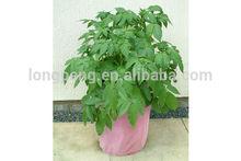 Colorful Patio,Garden Planting Bag,Growing Bag