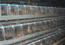 garantía de calidad atype automática de codorniz equipo de granja