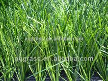 Cheap artificial grass soccer fake turf