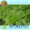 100% Natural Angelica Keiskei Extract/Ashitaba Powder/Ashitaba Extract Powder