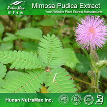 Hot Sale Sensitiveplat Herb Extract,Sensitive Plant Extract,Mimose Extract 4:1~20:1