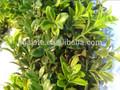 Rl/08-28/02 künstliche ring Blätter( künstliche magnolie blatt/künstliche Gras deste)