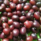 Amish Cranberry Beans