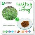 hipolipemiantes erva extracto de solvente livre de resíduos de ácido rosemarinic carnosic ácido a partir de folhas de alecrim extrato de alecrim