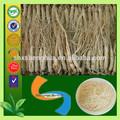 sain de ginseng ginsenoside extrait de racine de panax ginseng