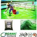 Fabricante que vende precio para la espirulina / espirulina importación ee.uu. / spirulina en polvo para animales de alimentación